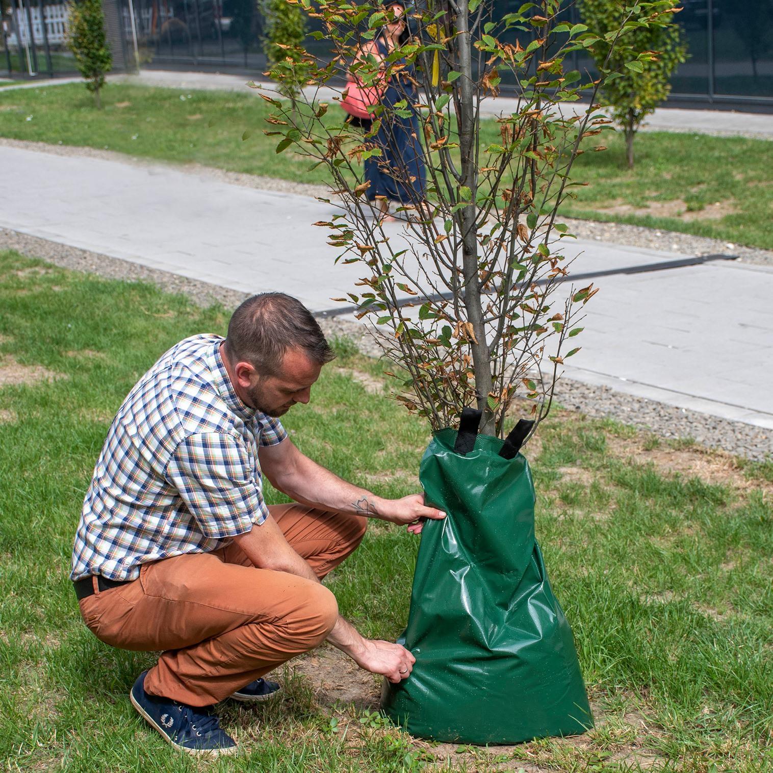 Öntözőzsákokokat helyeztek ki fiatal fákhoz